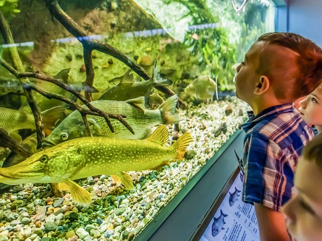 Naturkundemuseum-2018.07+08