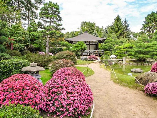AuswählenHinzufügen Gewählte Dateien (0) Upload*  Japanischer Bonsaigarten_Chrysanthemenblüte