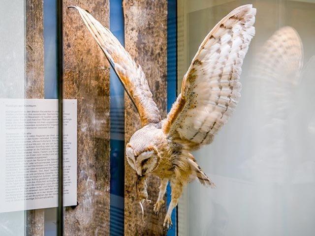 Naturkundemuseums